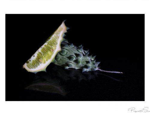 cactuskomkommer